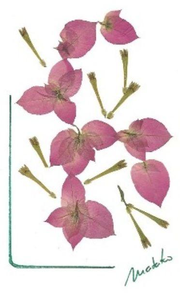Cartão Oshibana